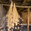 Stock Photo: Bunches of Nigellseed pods hanging in barn