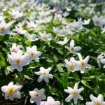 Flower — Stock Photo #11004139