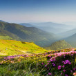 Mountain landscape — Stock Photo #11004734