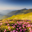 Mountain landscape — Stock Photo #11005099