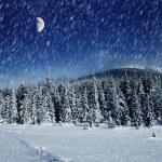 Winter — Stock Photo #11008720
