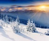 Winter — Stock Photo