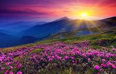Paysage de montagne — Photo