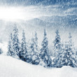 Winter — Stock Photo #11038870