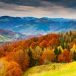 Autumn — Stockfoto #11039218