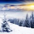 Winter — Stock Photo #11039345