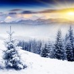 Winter — Stock Photo #11039345