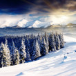 Winter - 