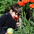 Little boy smells a wild flower. - Stock Photo