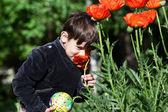 Garotinho cheira uma flor selvagem. — Fotografia Stock