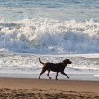 Foto Stock: Dog on beach