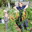Mature woman in garden with small daughter picking the carrot - Stock Photo