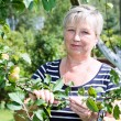 Stock Photo: Mature adult womstanding near apple-tree with green apples brunch