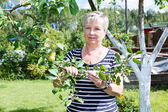 Senior adult woman standing near apple-tree with green apples brunch — Stock Photo
