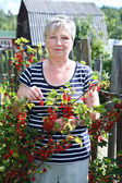 Senior woman in own garden with brunch of red currants berries — Stock Photo
