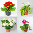 Set of indoor plants — Stock Photo