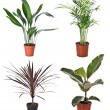 Foto Stock: Set of indoor plants