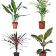 Foto de Stock  : Set of indoor plants
