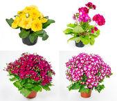 Set of indoor plants — Stock Photo