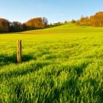 Green Pastures around Farm House in Switzerland — Stock Photo #10786502