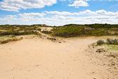 Big Dunes — Stock Photo