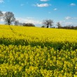 Stock Photo: Meadows of Tuscany