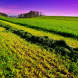 New-mown Hay — Stock Photo