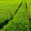 Green Pastures - Stock Photo