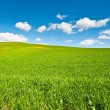 Green Hills - Stock Photo
