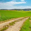 Green Fields - Stock Photo