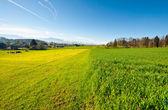 绿绿的草地 — 图库照片