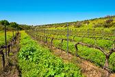 Field in Israel — Stock Photo