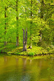 Greenwood on the Canal Bank in the Netherlands — Stock Photo