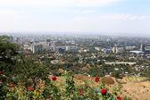 Almaty landscope and roses — Stock Photo