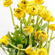 Yellow Ranunculus — Stock Photo #10799145