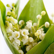 Lily-of-the-valley flowers — Stock Photo #10803379