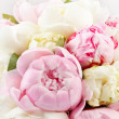 Stock Photo: Rich bunch of peonies