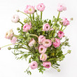 Pink Ranunculus — Stock Photo #10806353