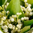 Lily-of-the-valley flowers — Stock Photo #10807091