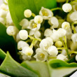 Lily-of-the-valley flowers — Stock Photo #10808240