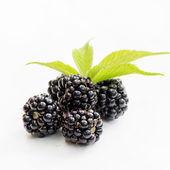 Dewberries (blackberries) and green leaves — Stock Photo