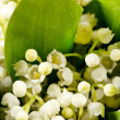 Lily-of-the-valley flowers — Stock Photo #10858523