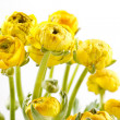Yellow Ranunculus — Stock Photo #10858596