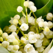 Lily-of-the-valley flowers — Stock Photo #10929063