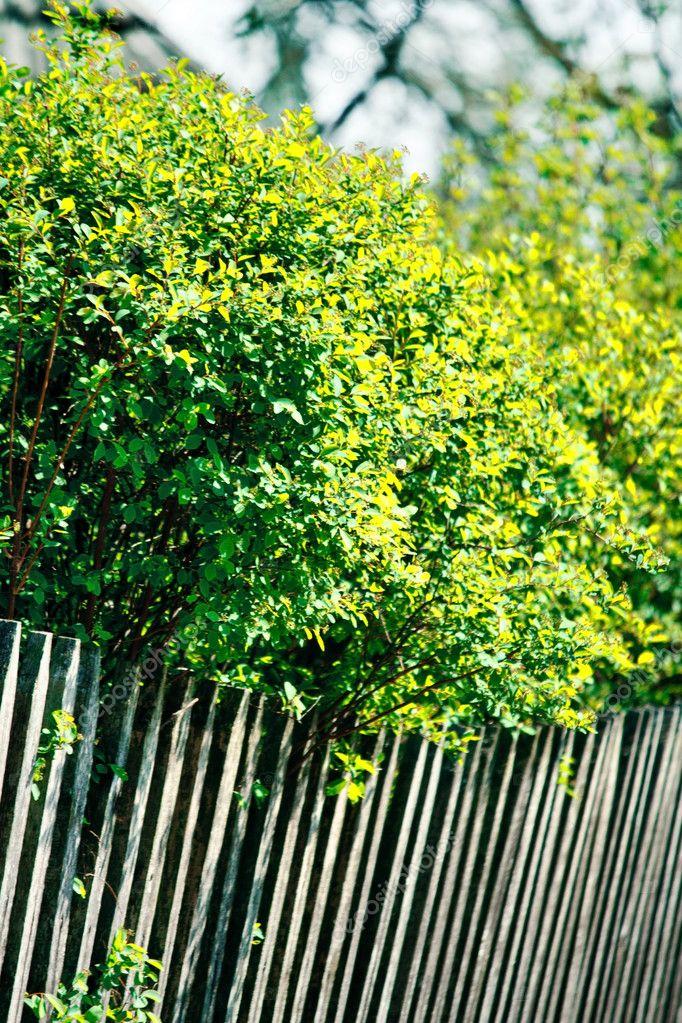 在花园的树的木栅栏