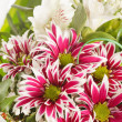 Bouquet of colorful flowers — Foto de Stock