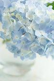 Flor azul em vaso — Fotografia Stock