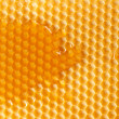 Fresh honey in comb — Photo