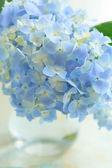Blå blomma i vasen — Stockfoto
