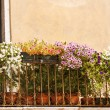 Flowers balcony - Stock Photo